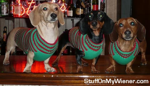 Buster, Jimmy, and Copper on the bar.