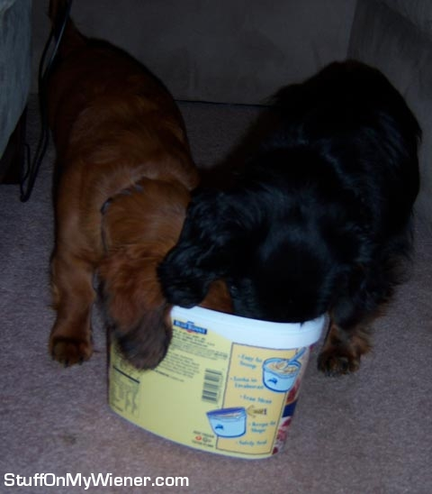 Hank and Rebel cleaning the Blue Bunny ice cream carton.