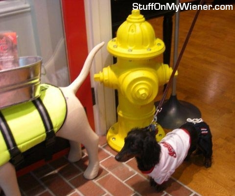 Shaky in shirt next to hydrant.