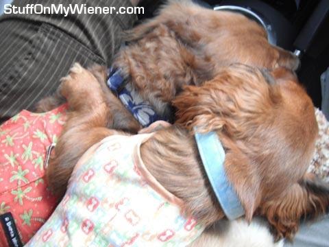 Brandee cuddles Schatzi.