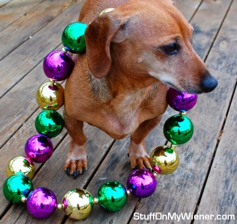 Basil with Mardis Gras beads.