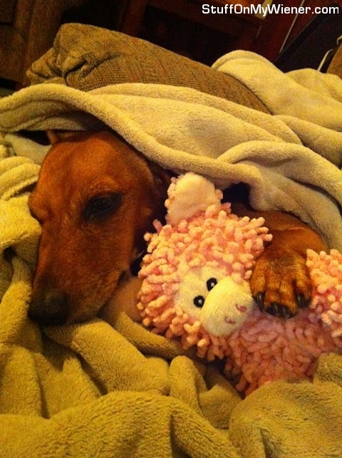 Lexie sleeping with her sheep toy.