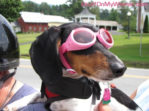 Squeak in her doggles.