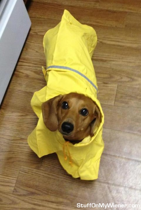 Eggo in a raincoat.
