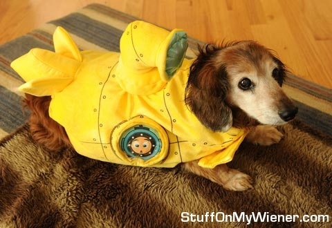 Ollie in a yellow submarine costume.