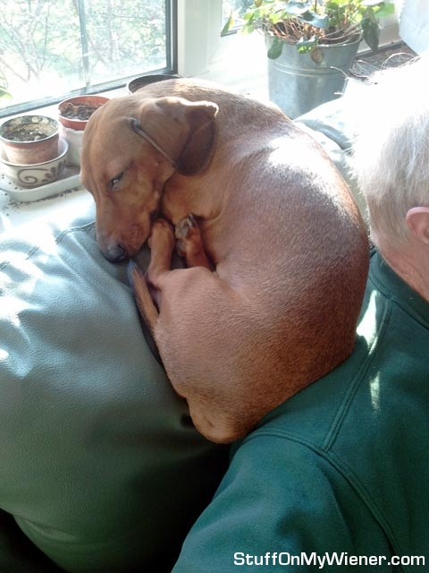 PJ sleeping on dad's shoulder.