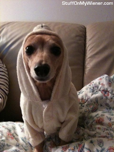 Peanut in her bathrobe.