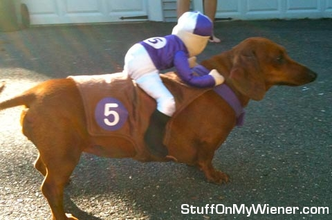 Penny with a jockey on her back.
