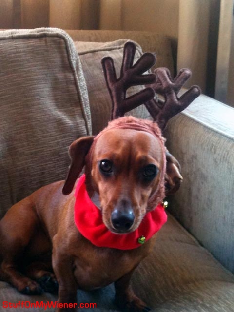 Bella wearing reindeer antlers.