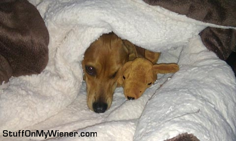 Brown Dog and toy.