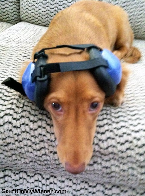Champ with ear protection headset.