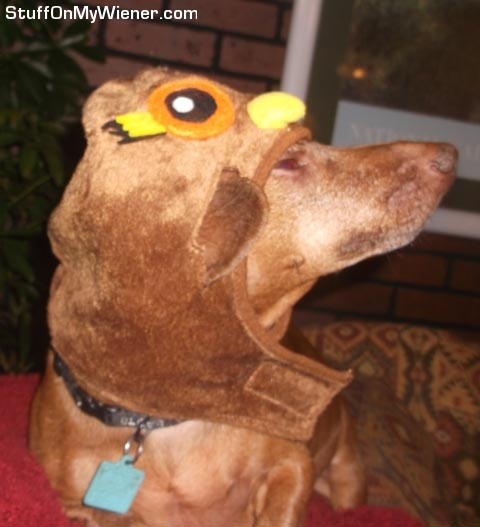 Gimli in an owl costume.