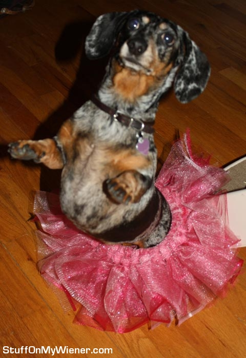 Abbey in a tutu