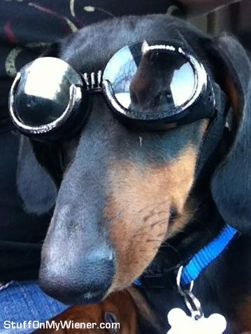 Dino wearing Doggles.