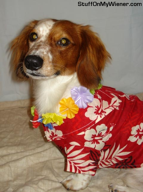 Kody in a Hawaiian shirt.