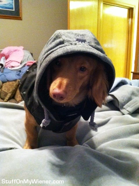 Champ in a hoodie.