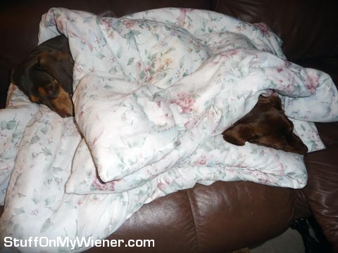 Emmy and Cocoa under a blanket.