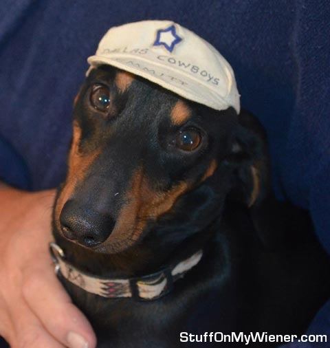 Sir Licks Alot in a Dallas Cowboys hat.