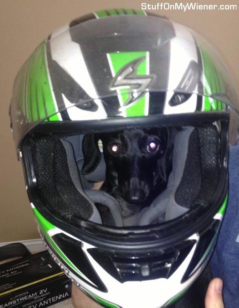 Elle in a helmet.