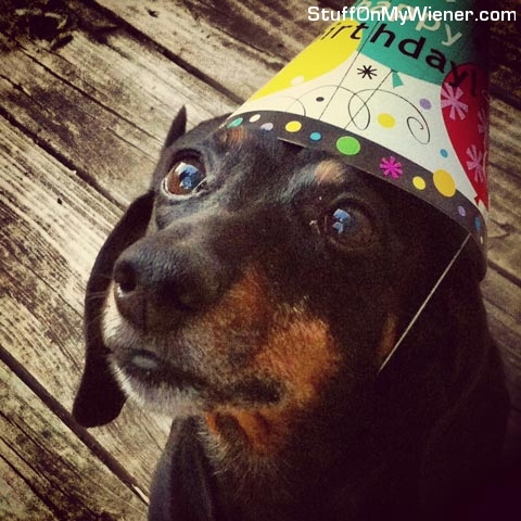 Scout in a birthday hat.