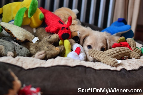 Jax in his bed with toys.