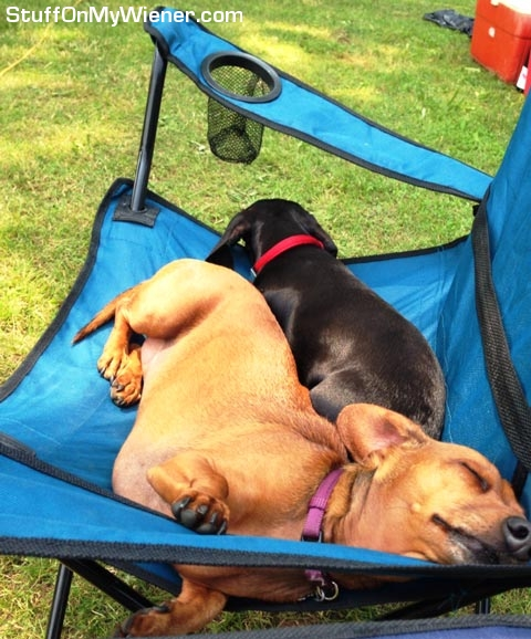 Abby and Vinnie sleeping in a chair.