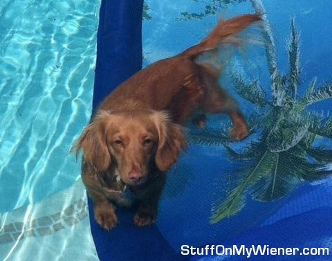 Champ in the pool.