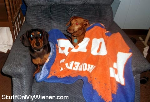 Gimli and Frodo under a blanket on a chair.