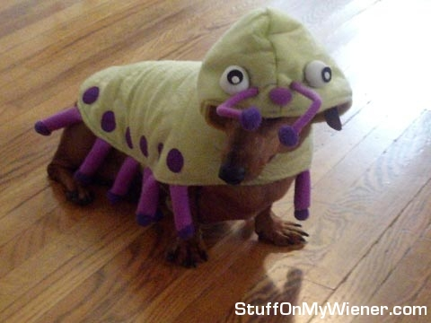 Pebbles in a caterpillar costum.