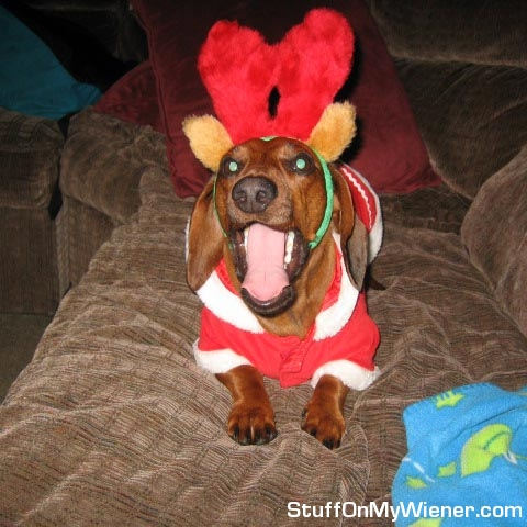 Bubbs in a Santa suit and antlers